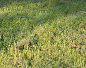 Gemaaid gras in Enschede