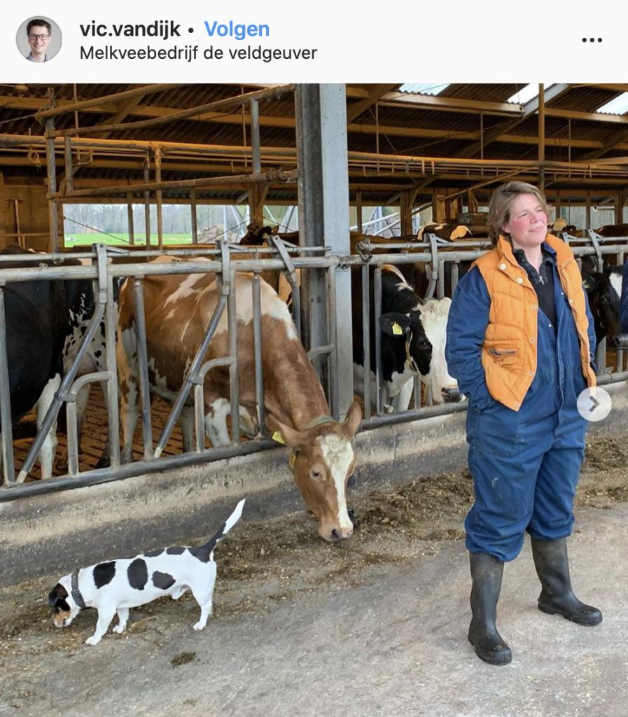 Foto koeien hond Karin Schukkink Instagram