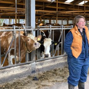 Boerin met koeien